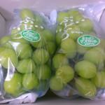 きれいな色のつややか葡萄シャインマスカット2房~徳島県阿波市のふるさと納税特産品(H26)