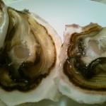 肉厚プリップリのミルキーな岩牡蠣~島根県西ノ島町のふるさと納税特産品(H27)